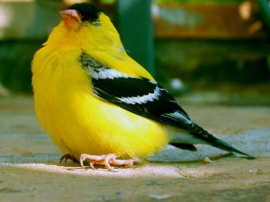 Making bird-friendly building design a priority