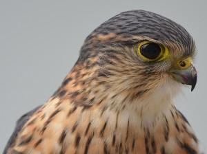 No bird-safe glass in Chicago suburb