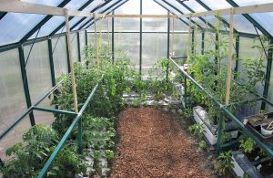 Solar glass research may improve greenhouses