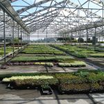 New glass coating can keep greenhouses cooler